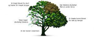 hvorfor skal træet fældes