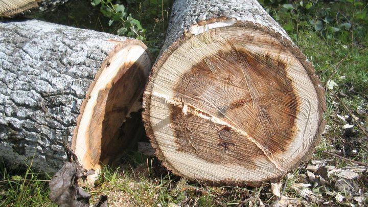 Få mere i plads i haven ved at fælde træer