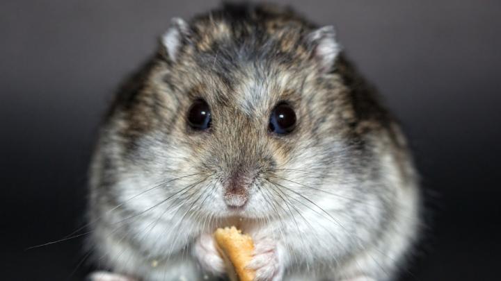 Månedsbokse til hamstere